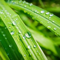 lemongrass essential oil 5ml