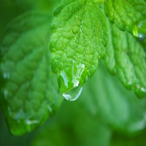plant magic gels