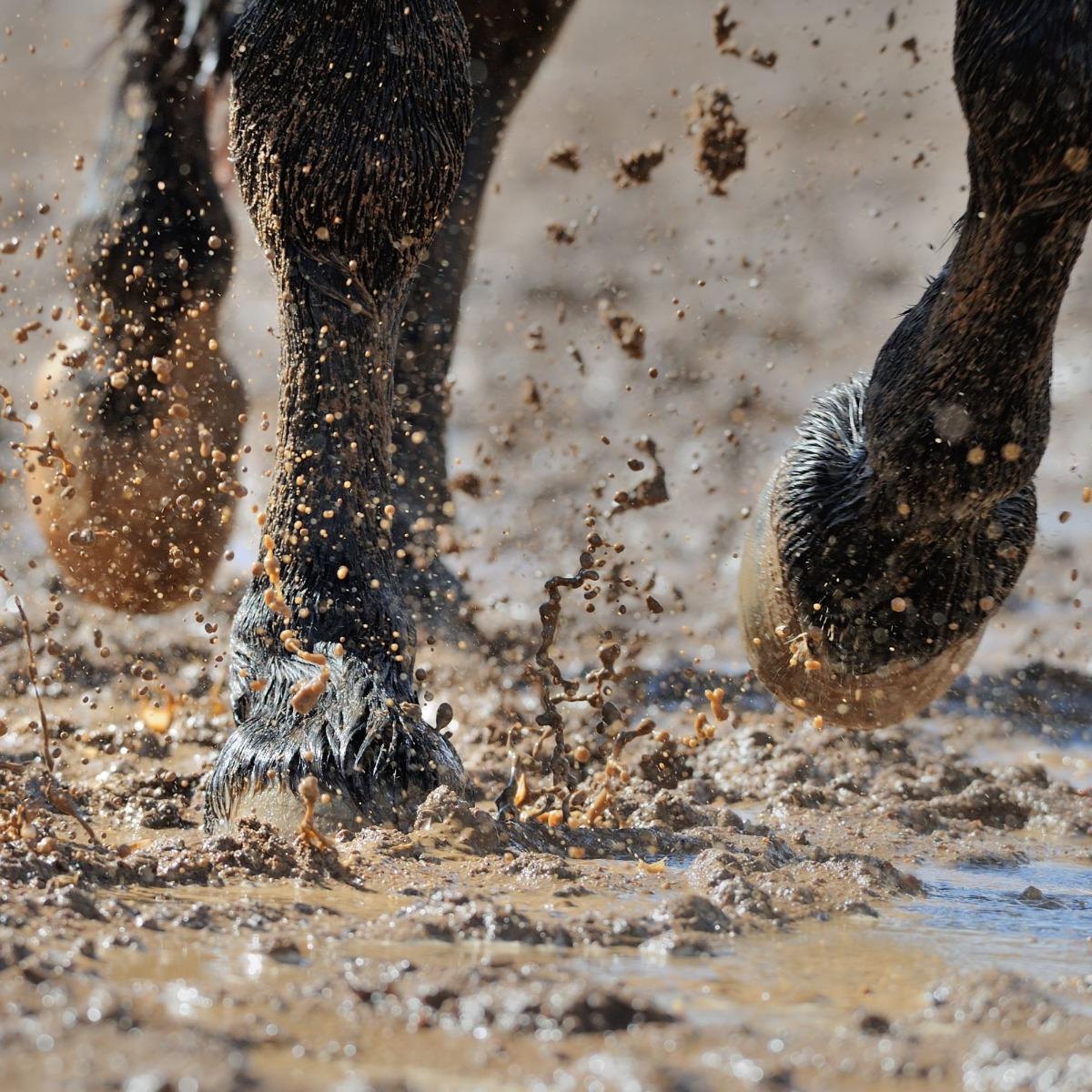 muddy solutions